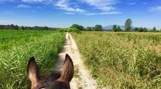 Horse riding in Fucecchio Marshes
